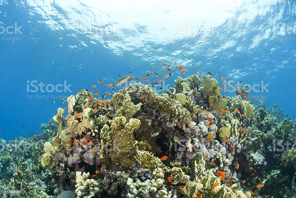 Colorful tropical coral scene in shallow water. royalty-free stock photo