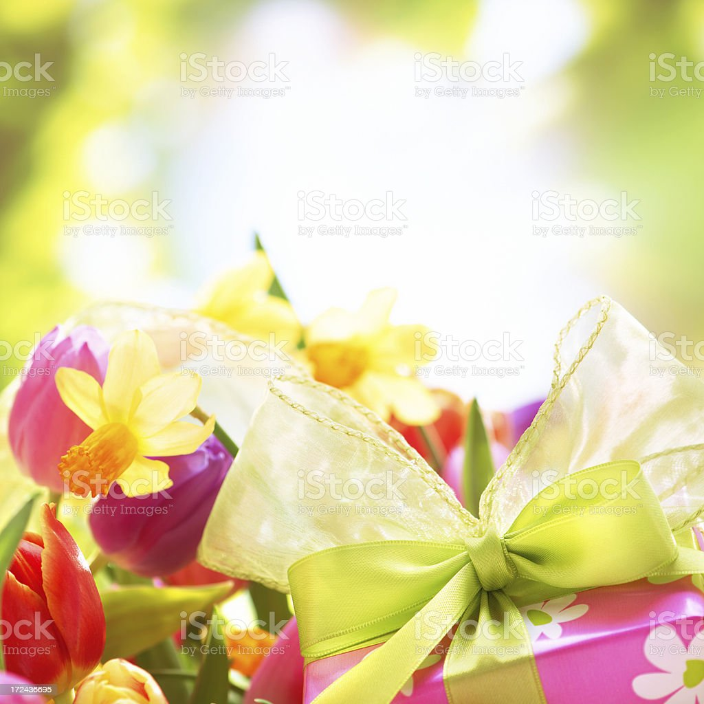 Colorful tulips  and daffodils in nature with a gift box royalty-free stock photo
