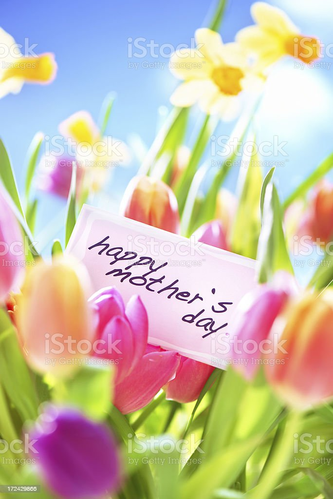 Colorful tulips  and daffodils with mothers day card in nature royalty-free stock photo