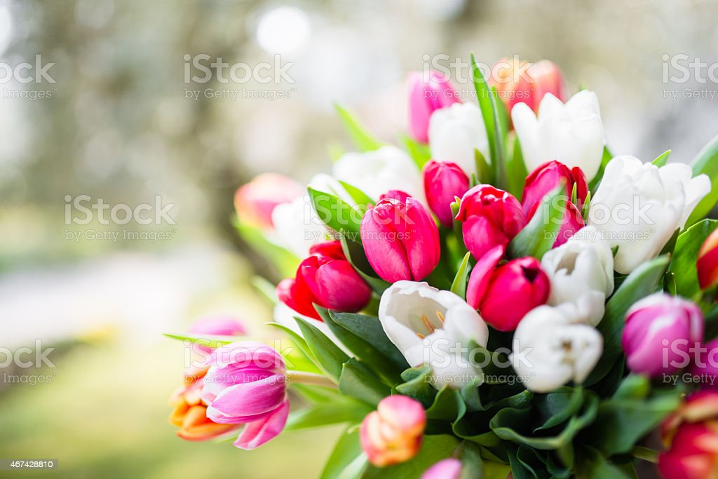 colorful tulips bouquet stock photo