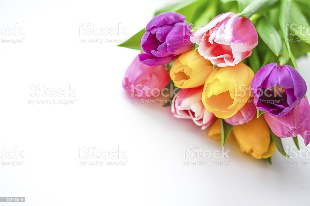 Colorful tulips on white background royalty-free stock photo