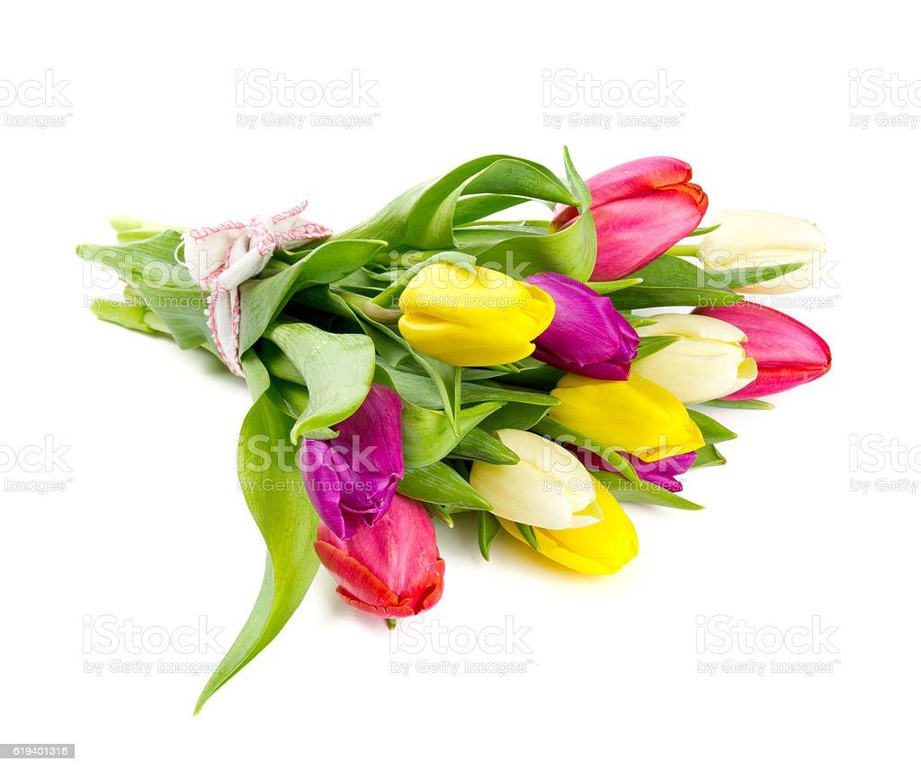 colorful tulips on white background stock photo