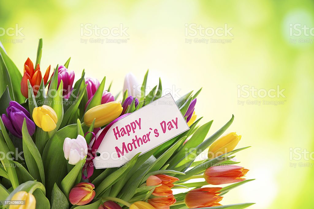 Colorful tulips with mothers day card in nature royalty-free stock photo