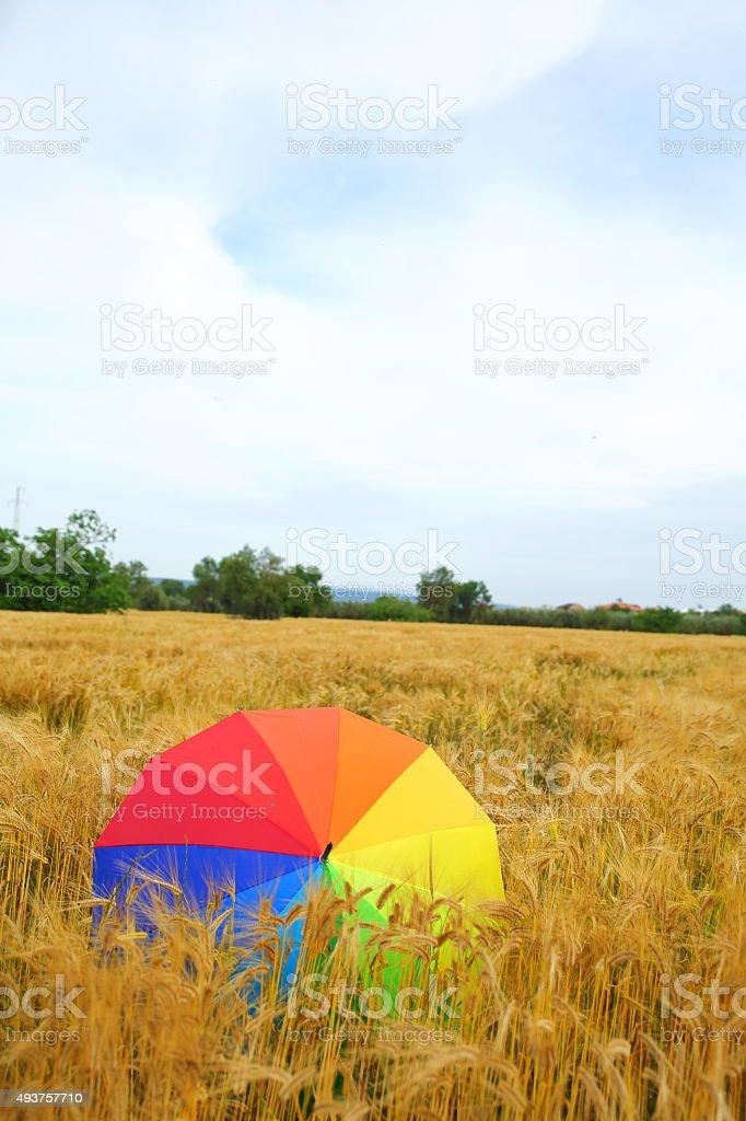 Colorful umbrella in a wheat field stock photo