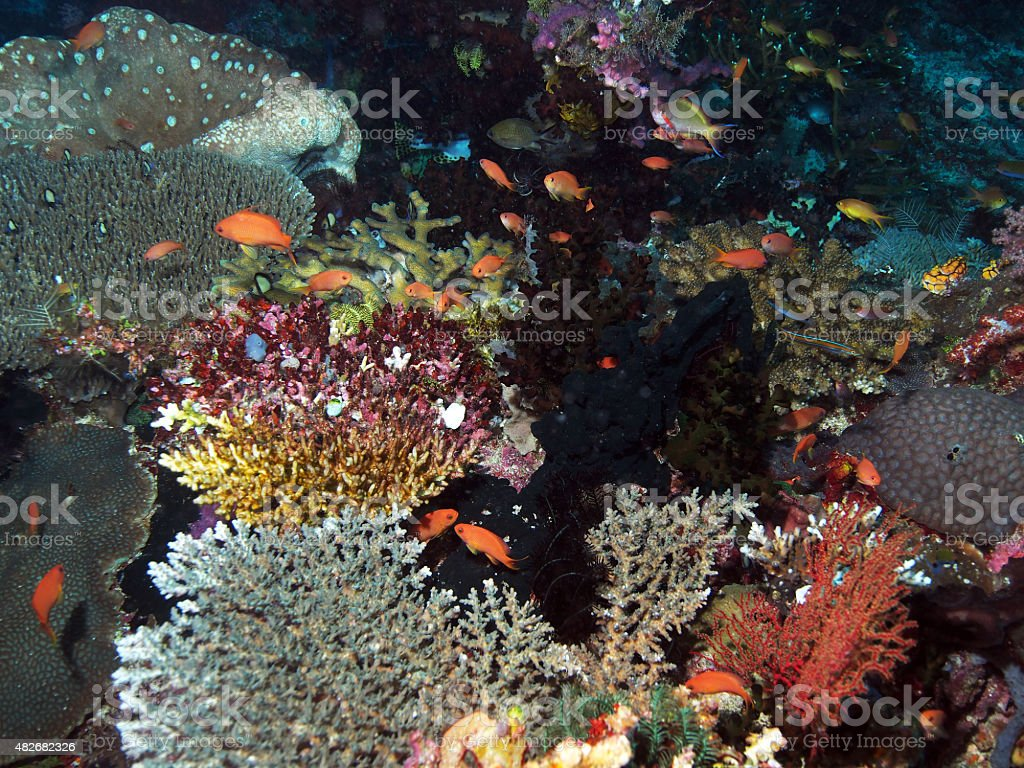 Colorful Underwater - Coral Reef stock photo
