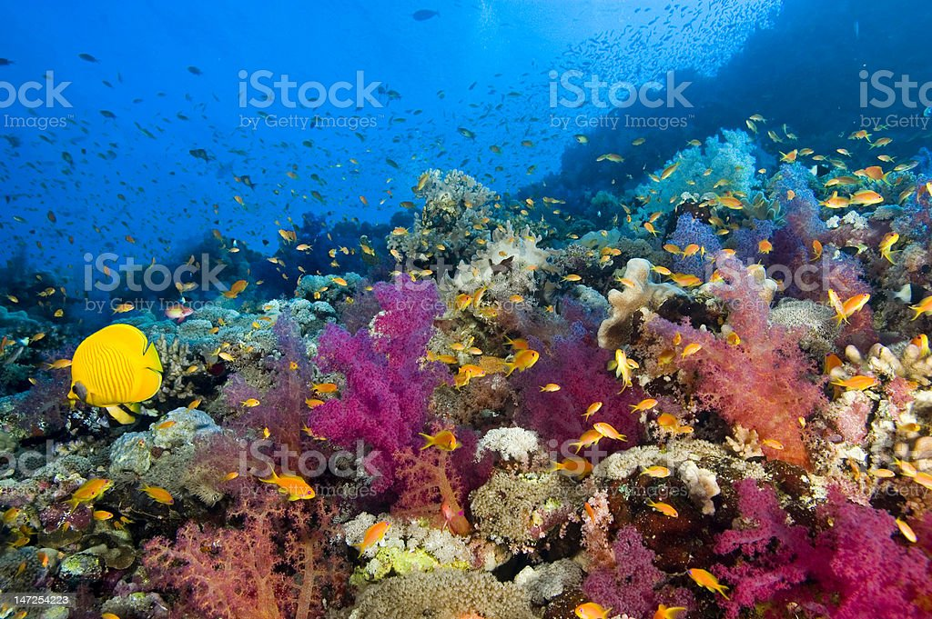 Colorful underwater image of sea life at the Red Sea reef stock photo
