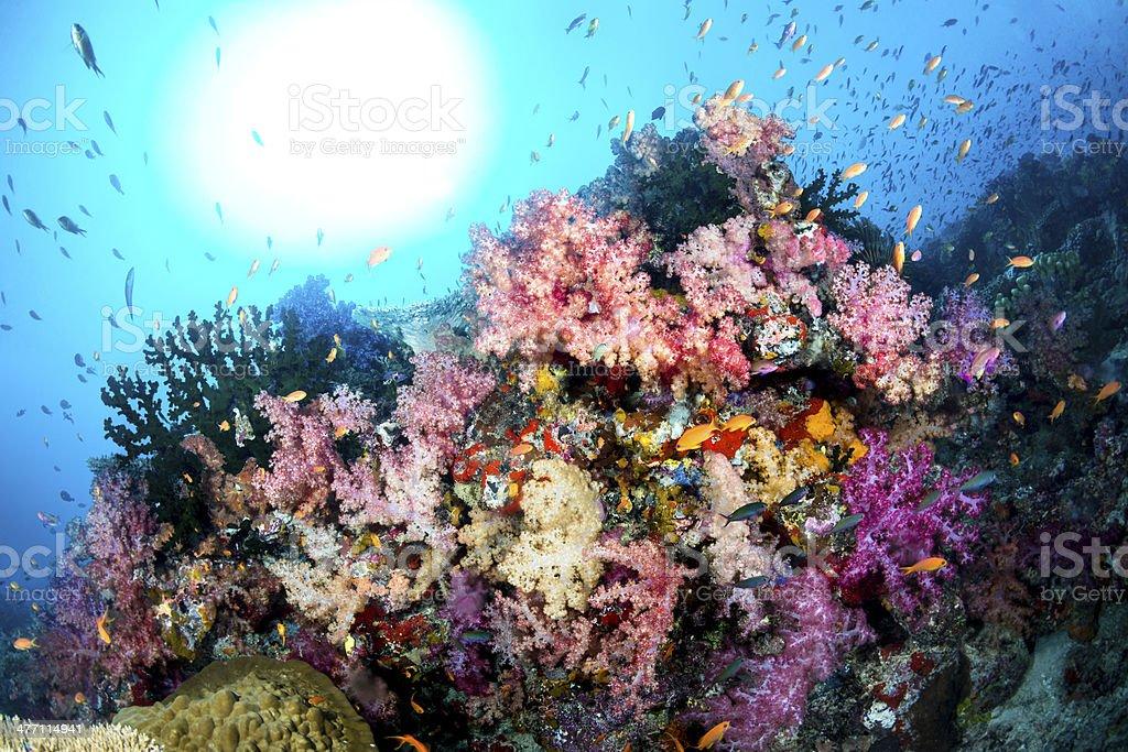 Colorful Underwater Reef stock photo