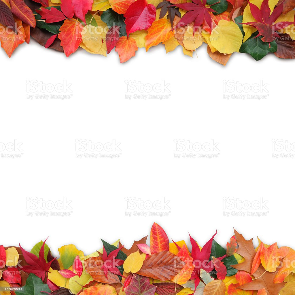 colorful variety of autumn leaves royalty-free stock photo