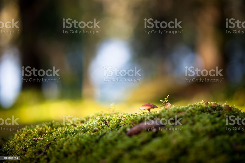 Colorful view of a mushroom and moss stock photo