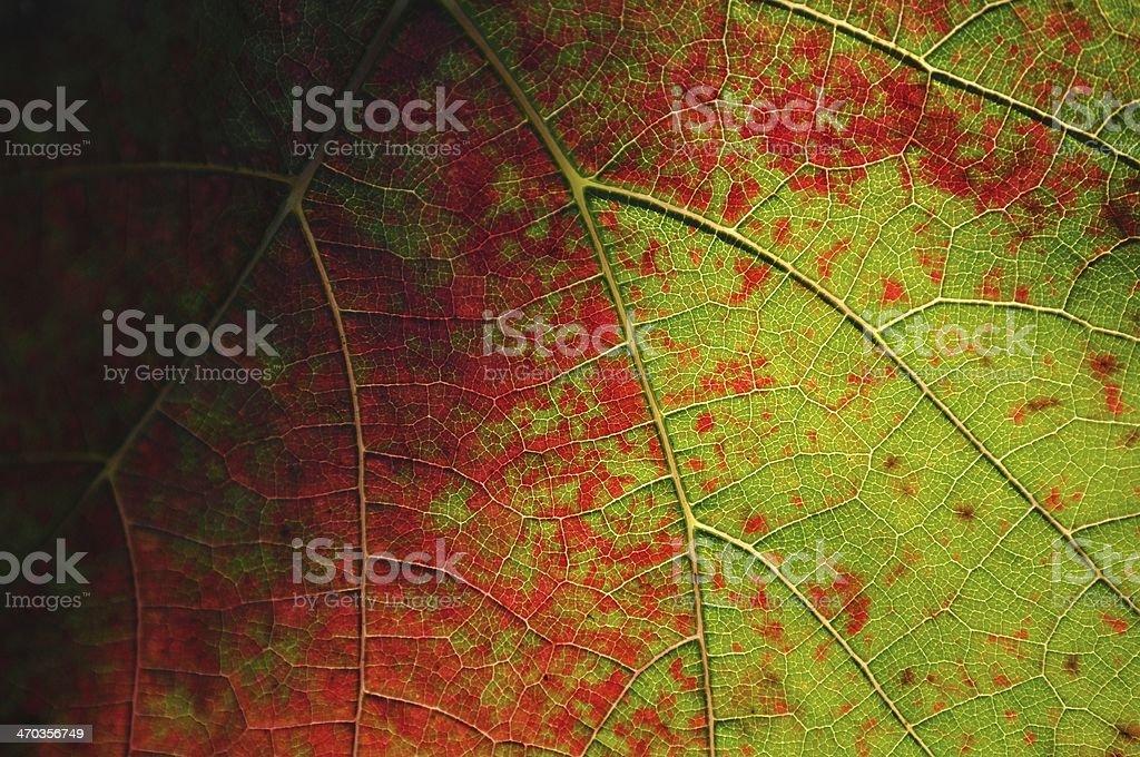 Tła na tle liści winorośli zbiór zdjęć royalty-free