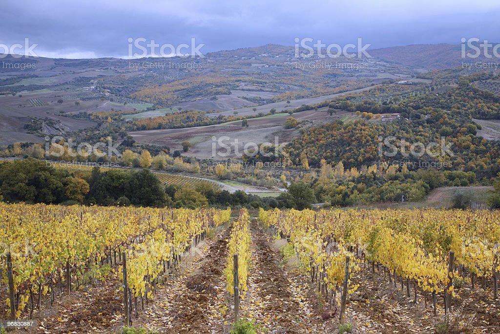 Colorful Vineyards of Tuscany royalty-free stock photo