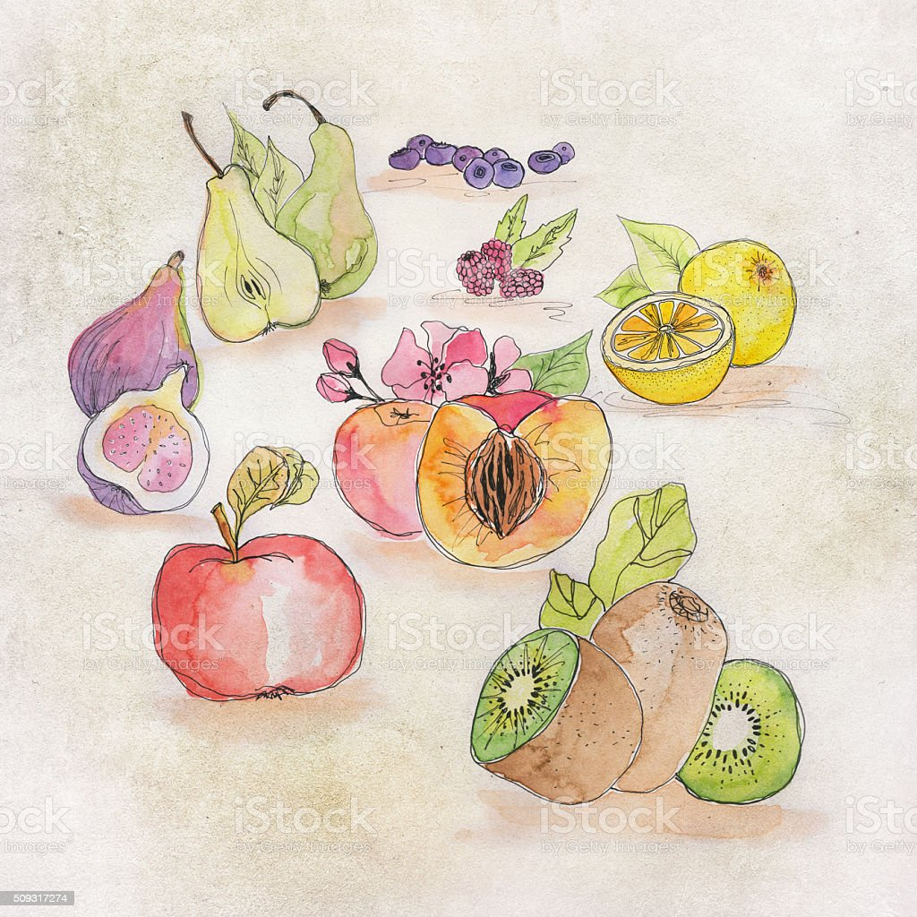 colorful watercolor illustration of different fruits stock photo