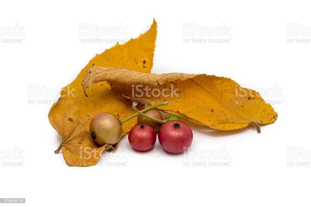 Colorful wild berries placed with colorful leaves stock photo