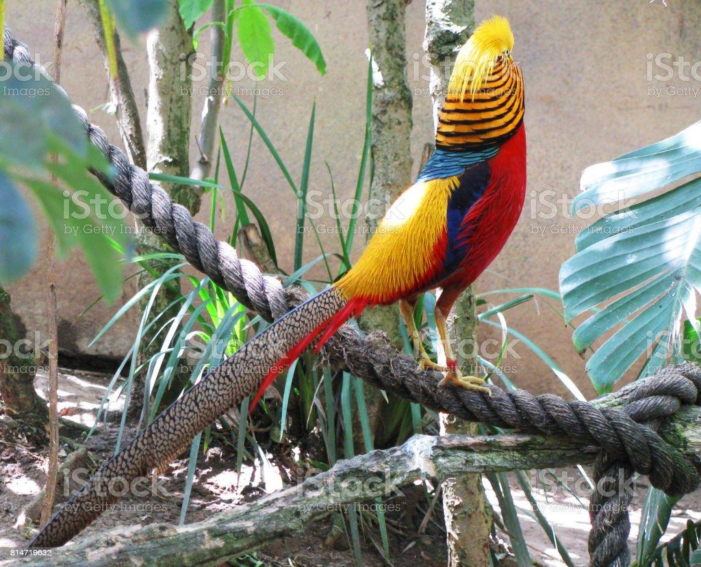 Colorful Wild Bird stock photo