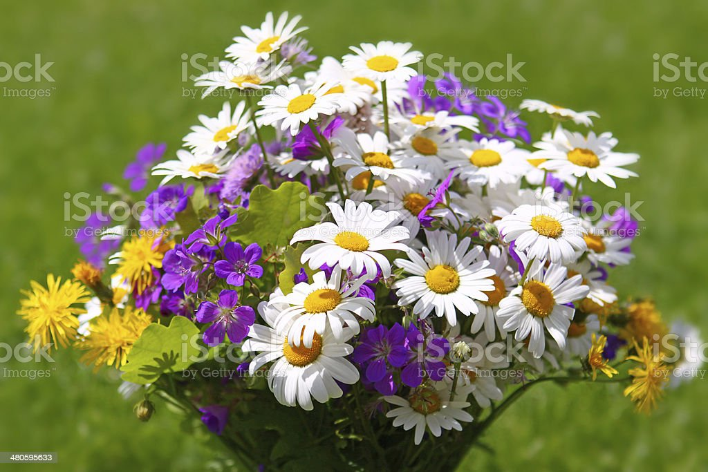 Colorful wildflowers bouquet . stock photo