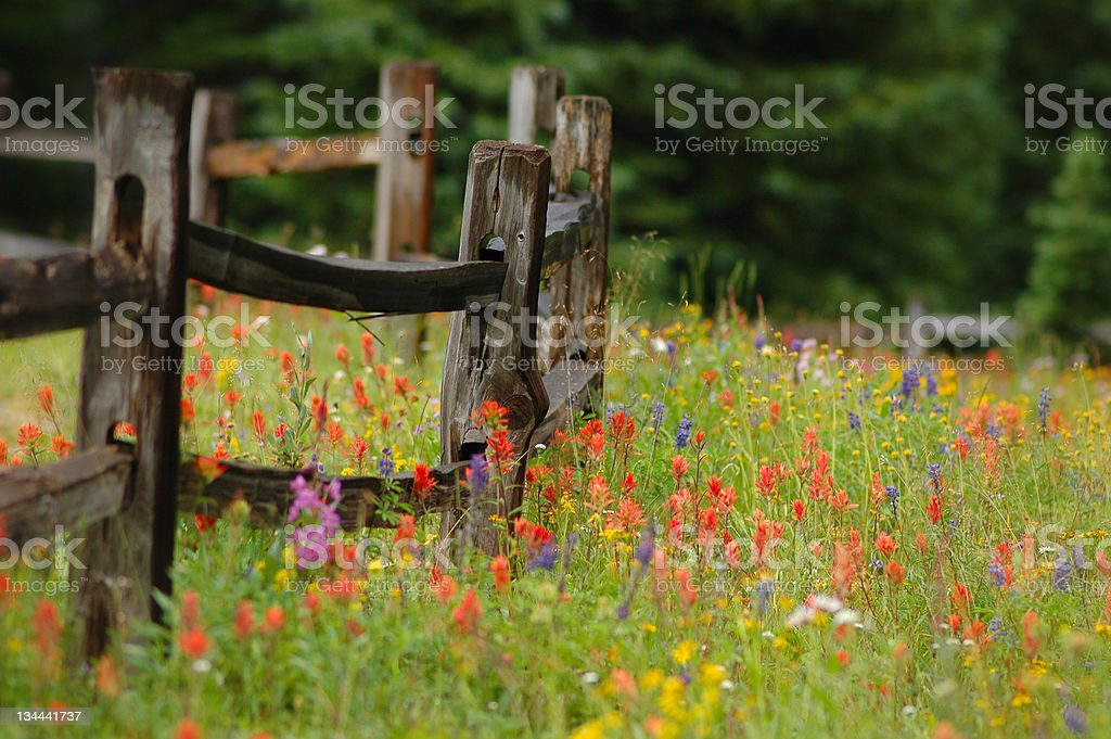 Colorful Wildlowers in Alpine Flower Meadow with Wood Fence royalty-free stock photo