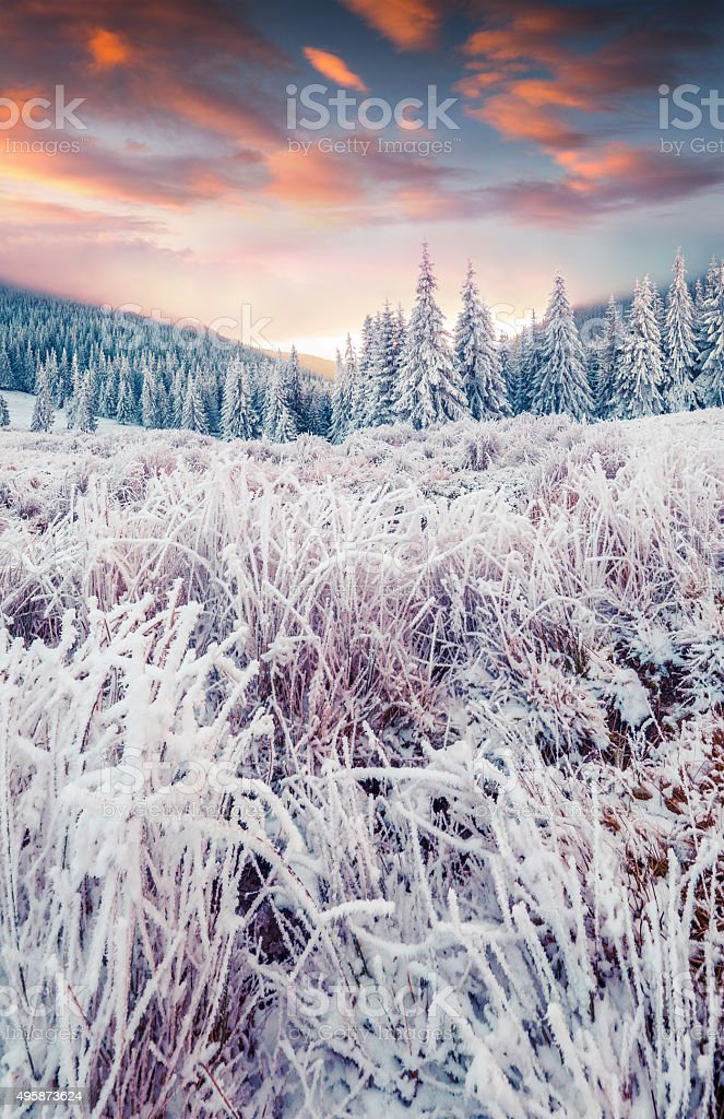 Colorful winter sunrise in the mountain forest. stock photo