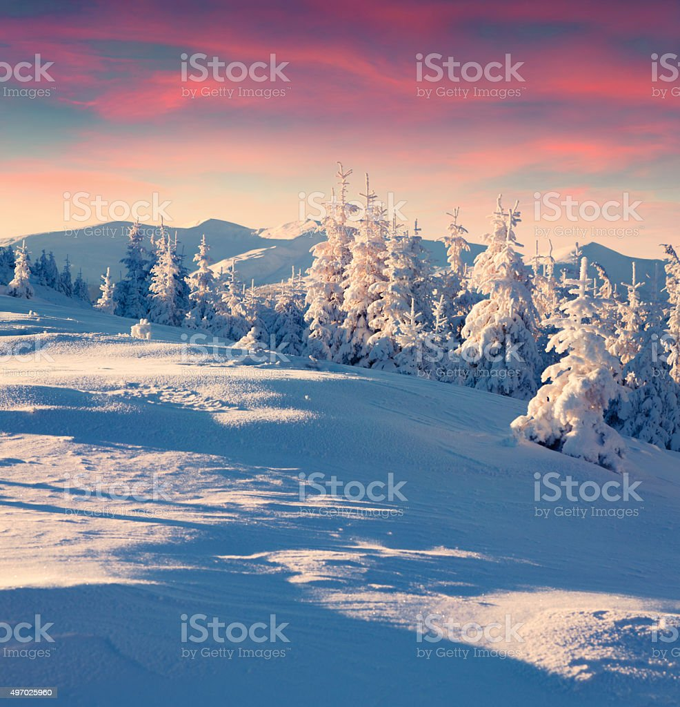 Colorful winter sunrise in the mountains. stock photo