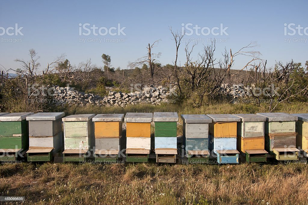 Colorful wooden beehives royalty-free stock photo
