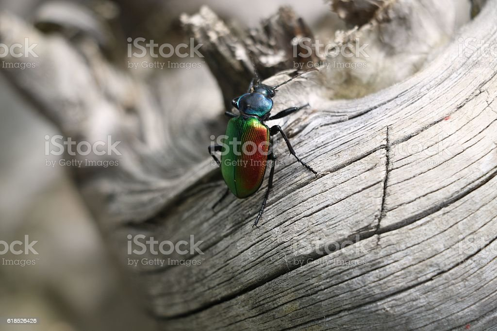 Colorfull bug or insect stock photo