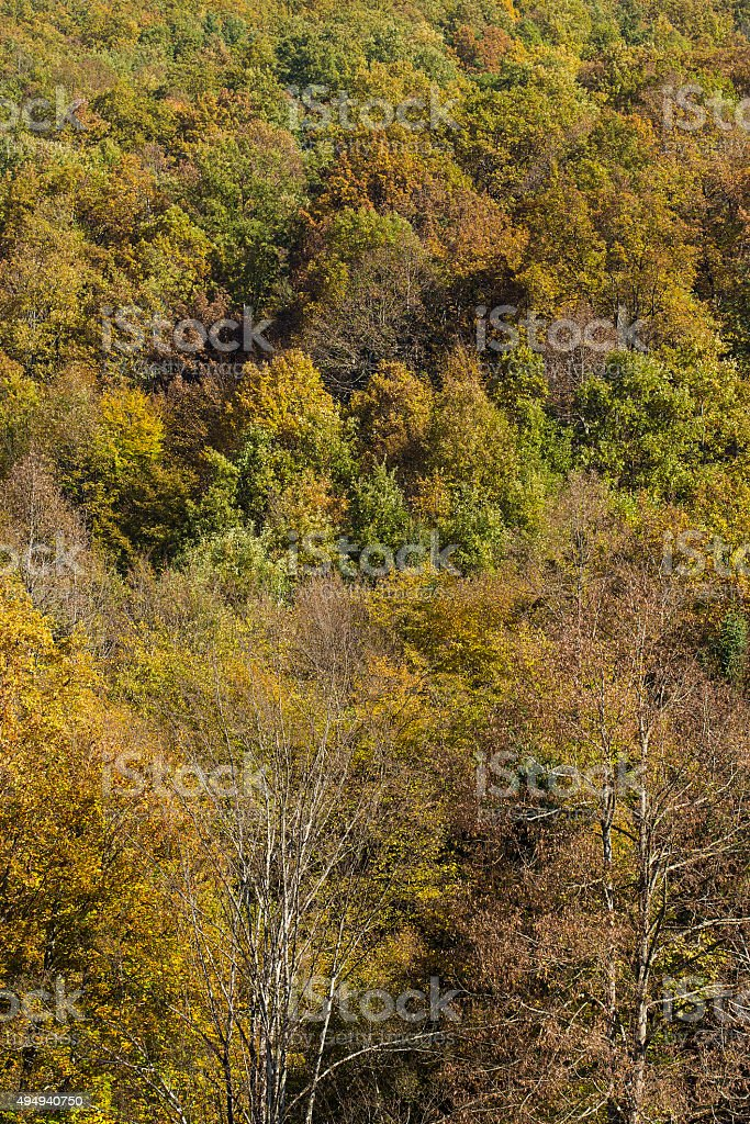 Colorfull forest stock photo