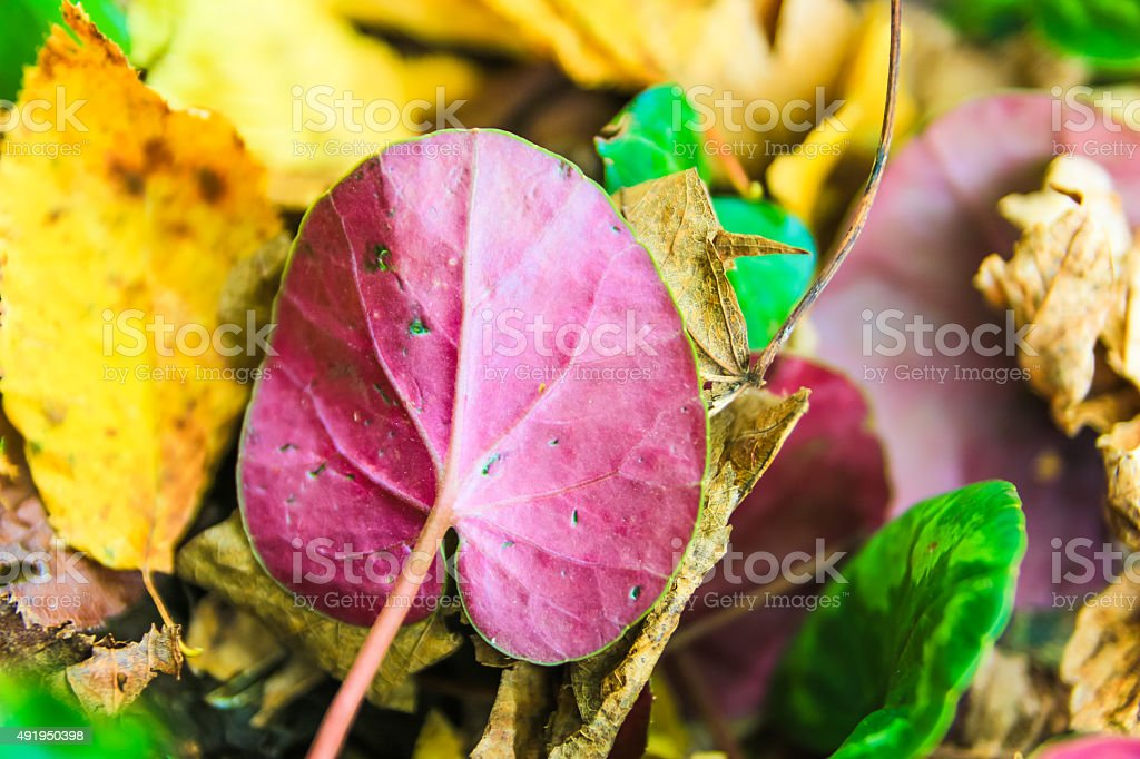 Colorfull leaves stock photo