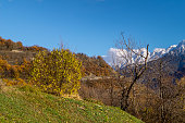 Colorfull panorama on autumn, with yellow tree and colored sky
