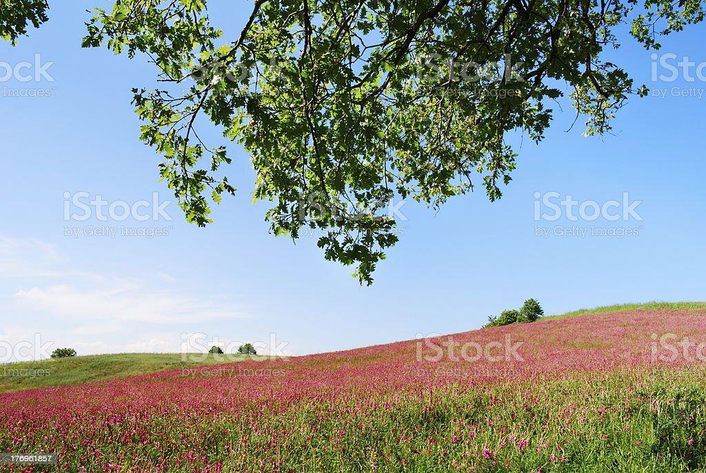 Colorfull prairie royalty-free stock photo