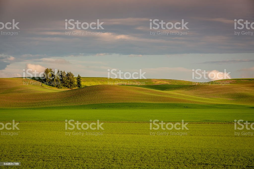 Colorfull spring crops of the Palouse Country stock photo