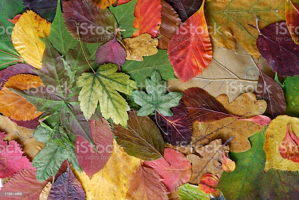 Colorfully leaves royalty-free stock photo