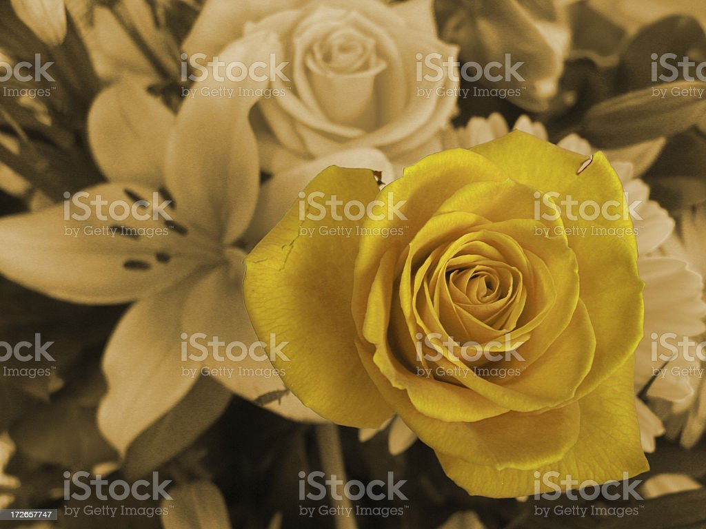 Colorized Flowers stock photo