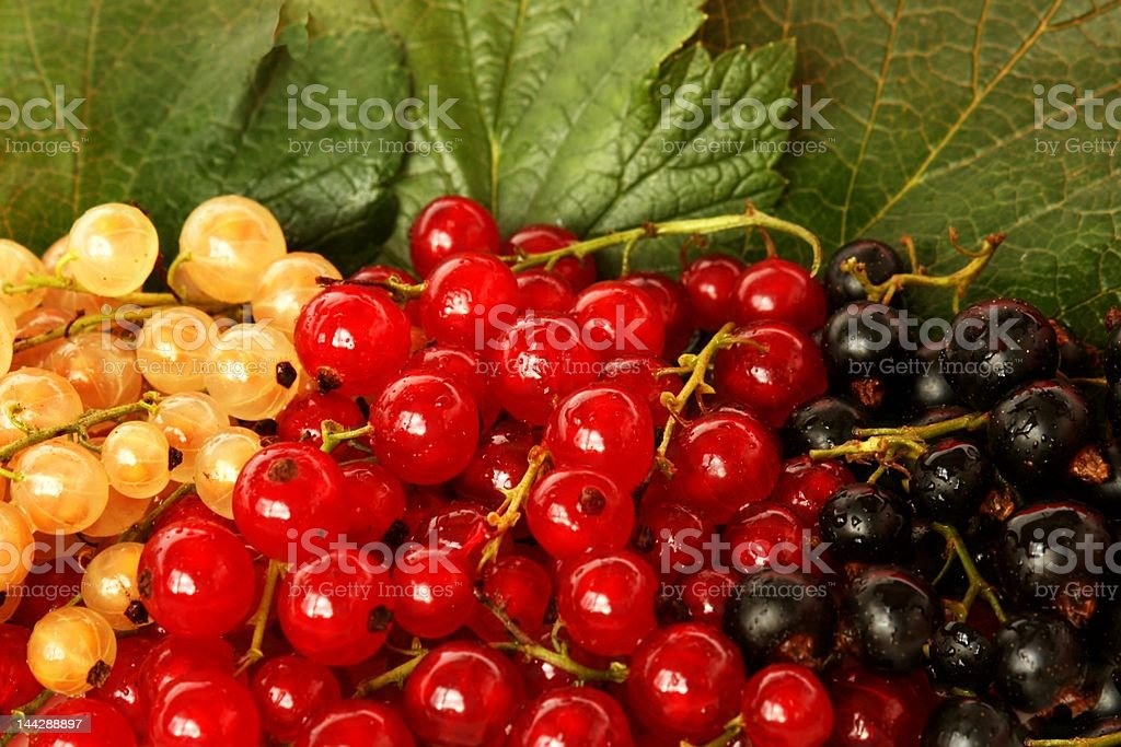 colors currant royalty-free stock photo