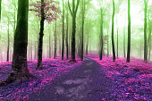 Colors of a dreamy foggy forest