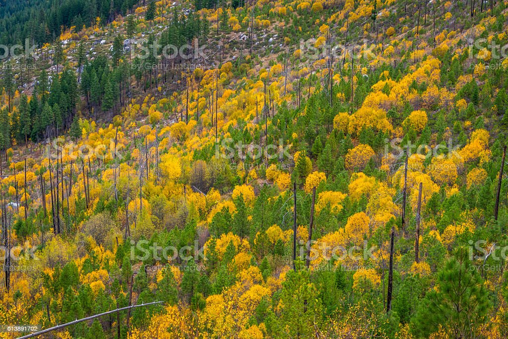 Colors of autumn in the mountains. Yellow and green trees. stock photo
