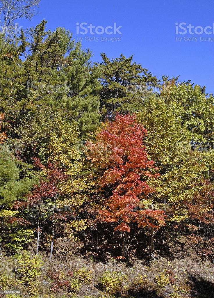 colors of autumn on a road trip royalty-free stock photo