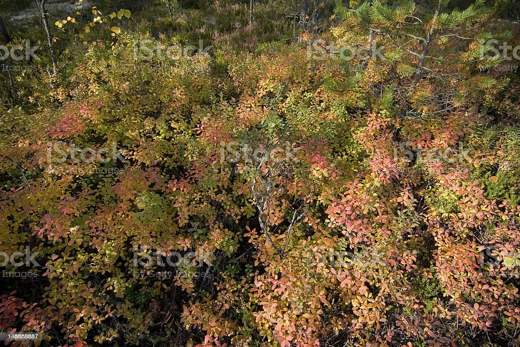 Colors of Autumn royalty-free stock photo