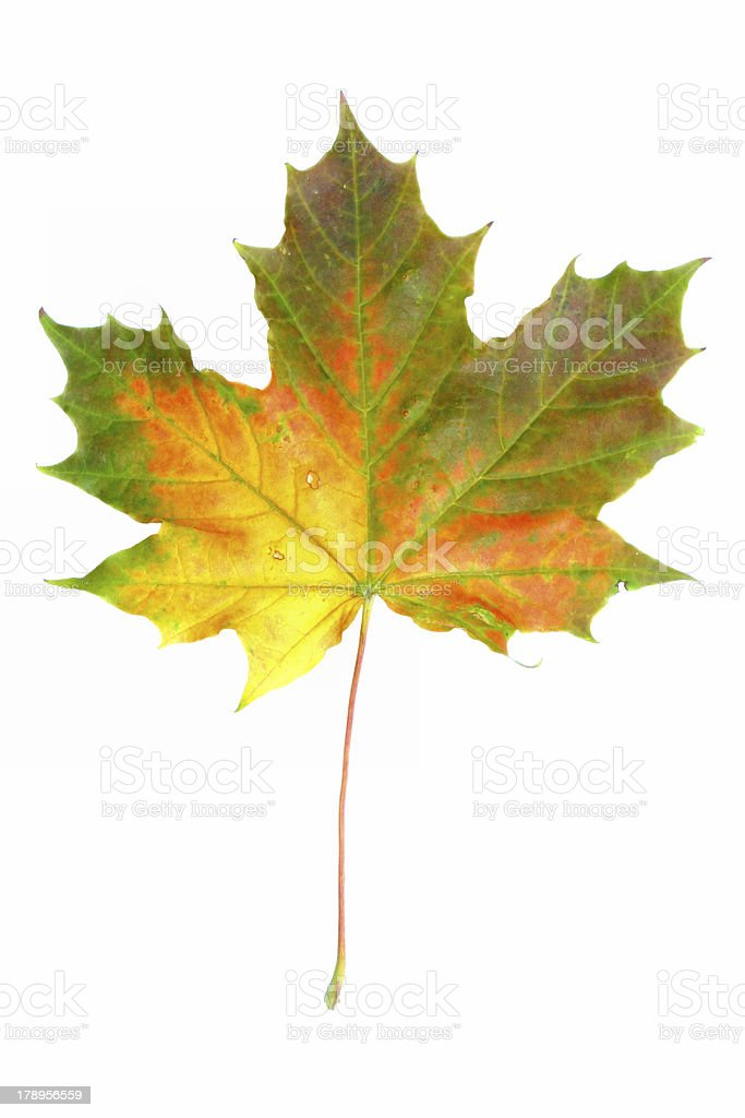 colors of autumn #2 royalty-free stock photo