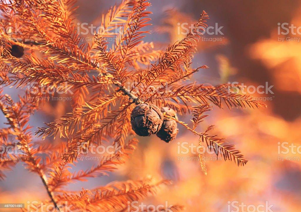 Colors of autumn stock photo