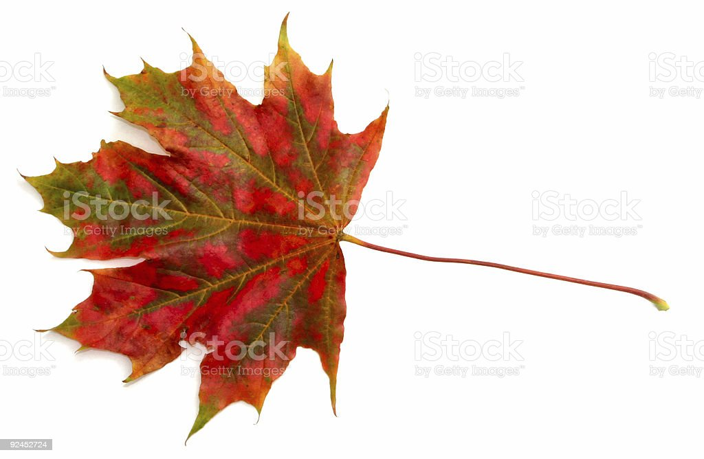 colors of autumn #3 royalty-free stock photo