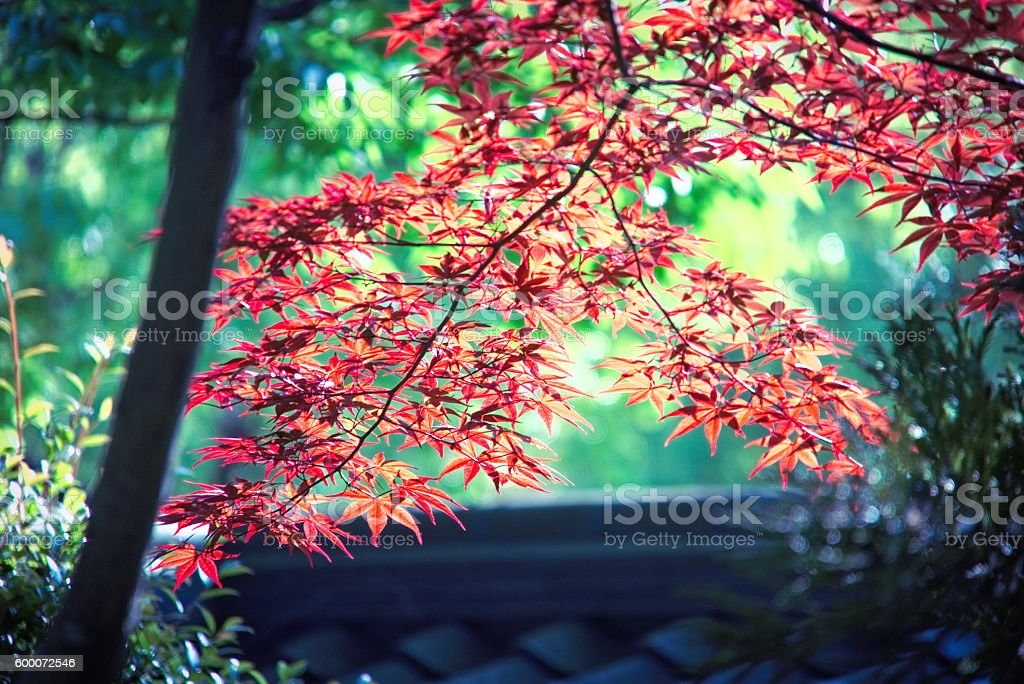 Colors of Japan stock photo