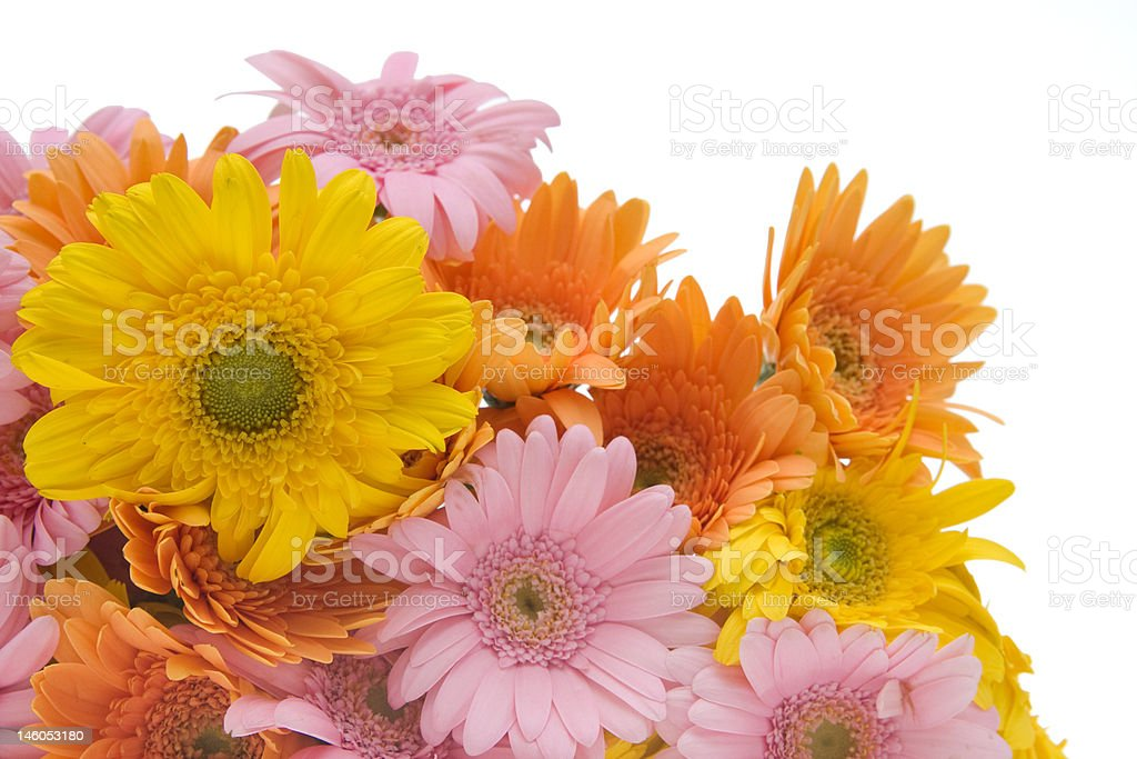 colors of summer royalty-free stock photo