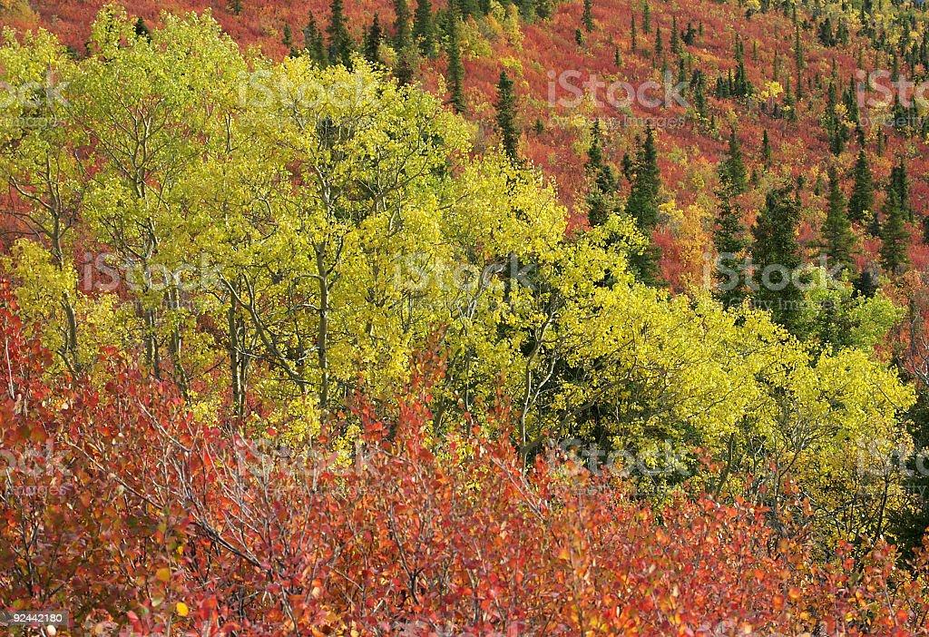 Colors of the Yukon stock photo