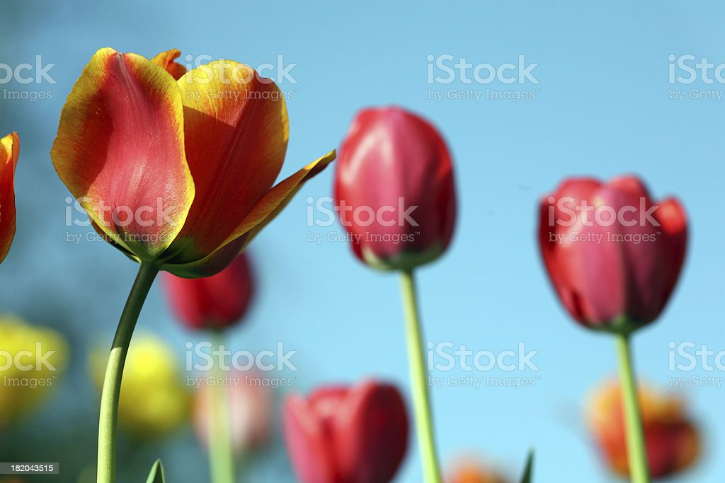 colors! royalty-free stock photo