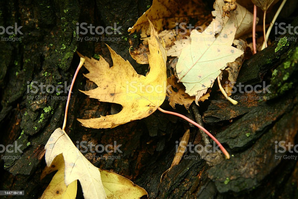 Colour contrast royalty-free stock photo