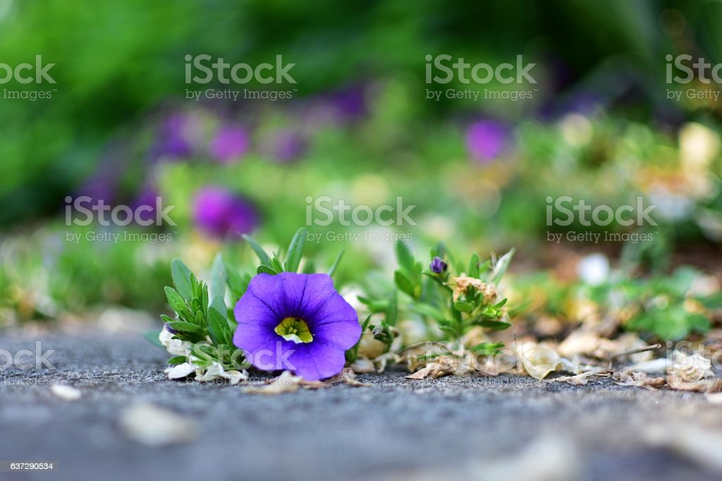 Colour of the day stock photo