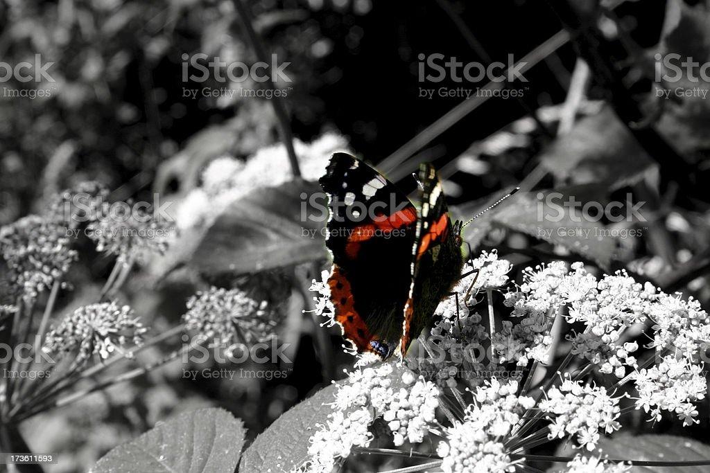 colour royalty-free stock photo