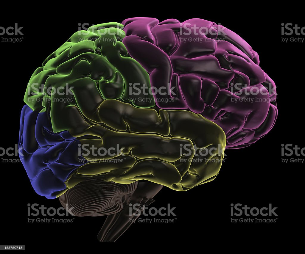 Coloured areas Right side of the Brain stock photo