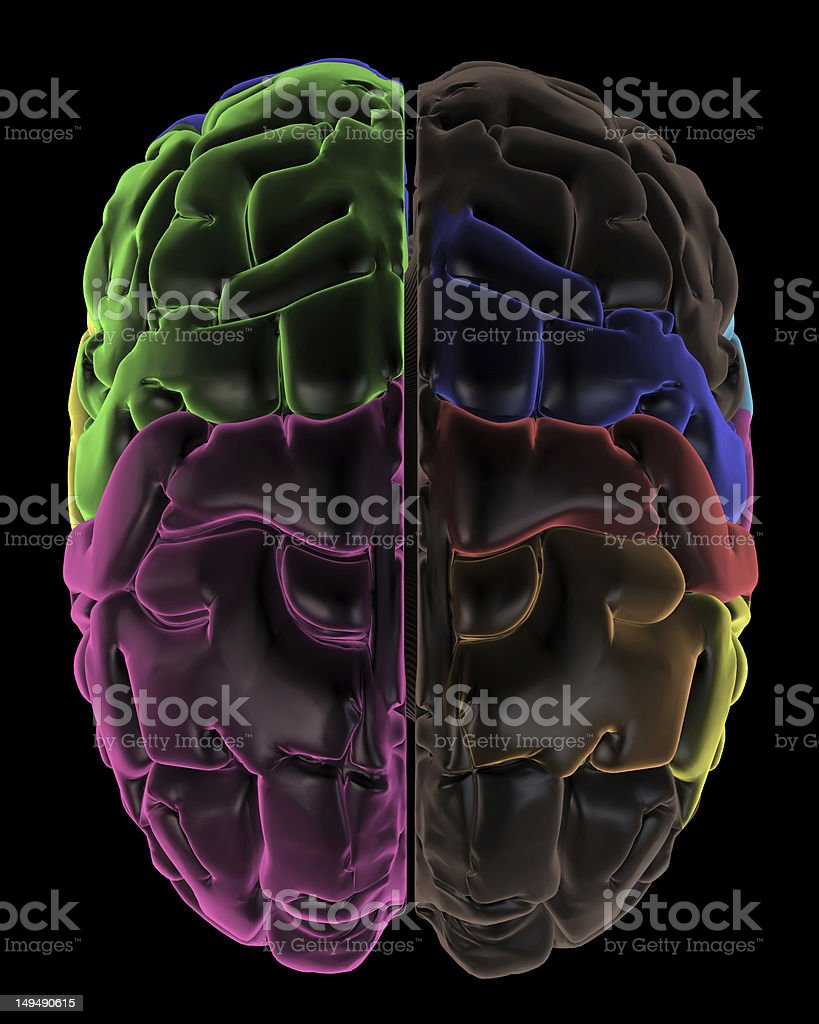 Coloured areas top of the Brain stock photo