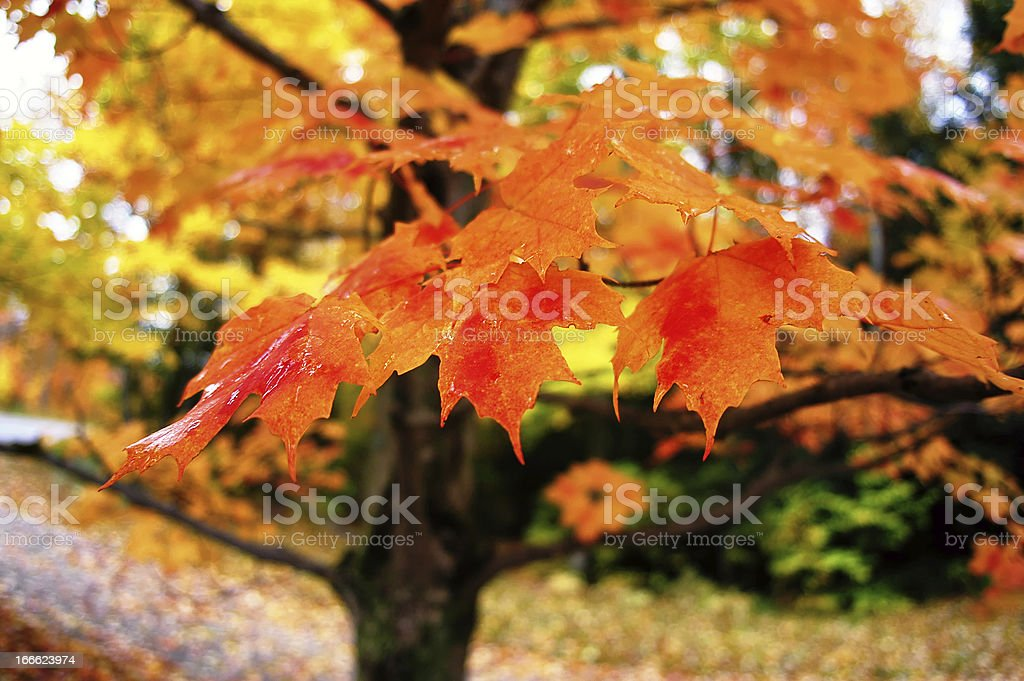 Coloured Branches royalty-free stock photo