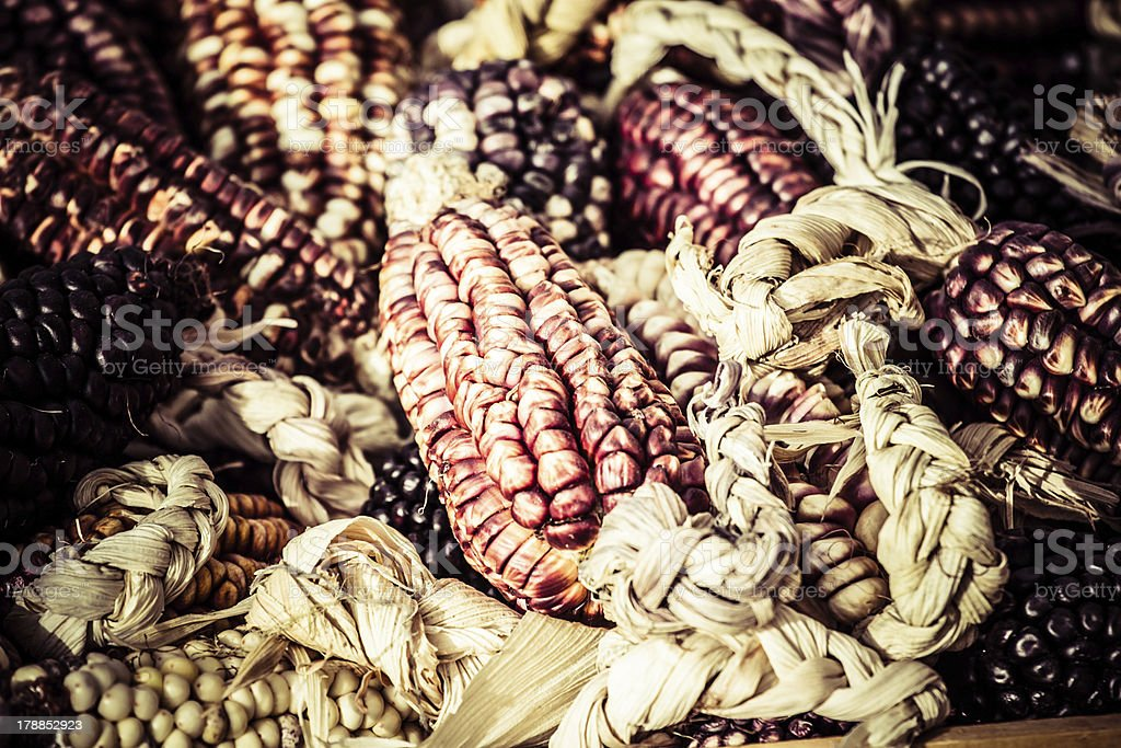 Coloured corn cobs in Peru royalty-free stock photo
